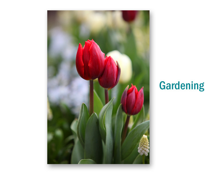 Gardening Photography